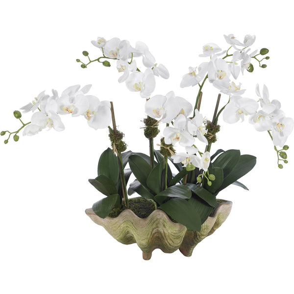 Clam Shell Orchid Arrangement