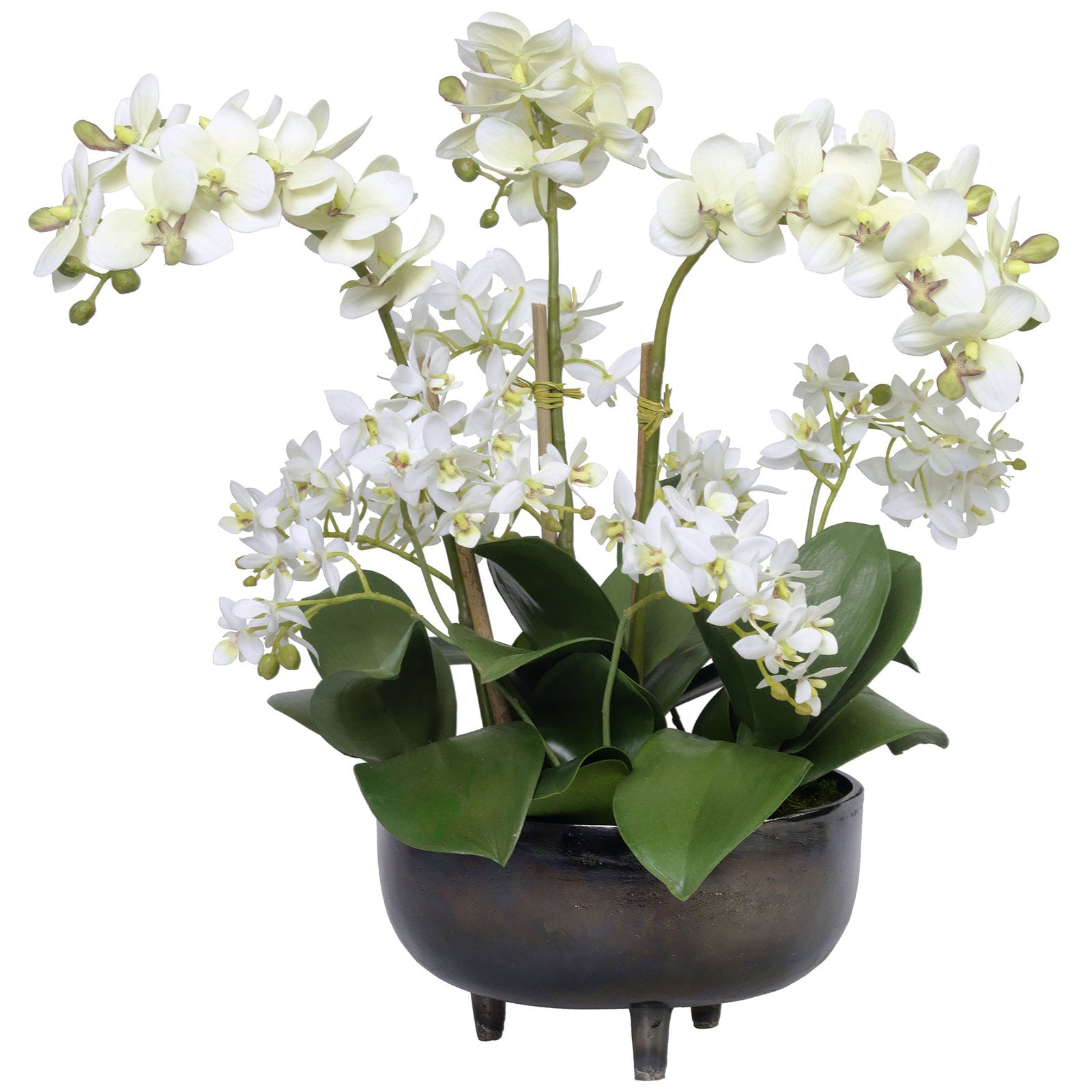 Large Orchid Planter Arrangement