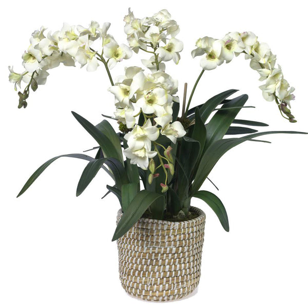New Traditionalist Orchids