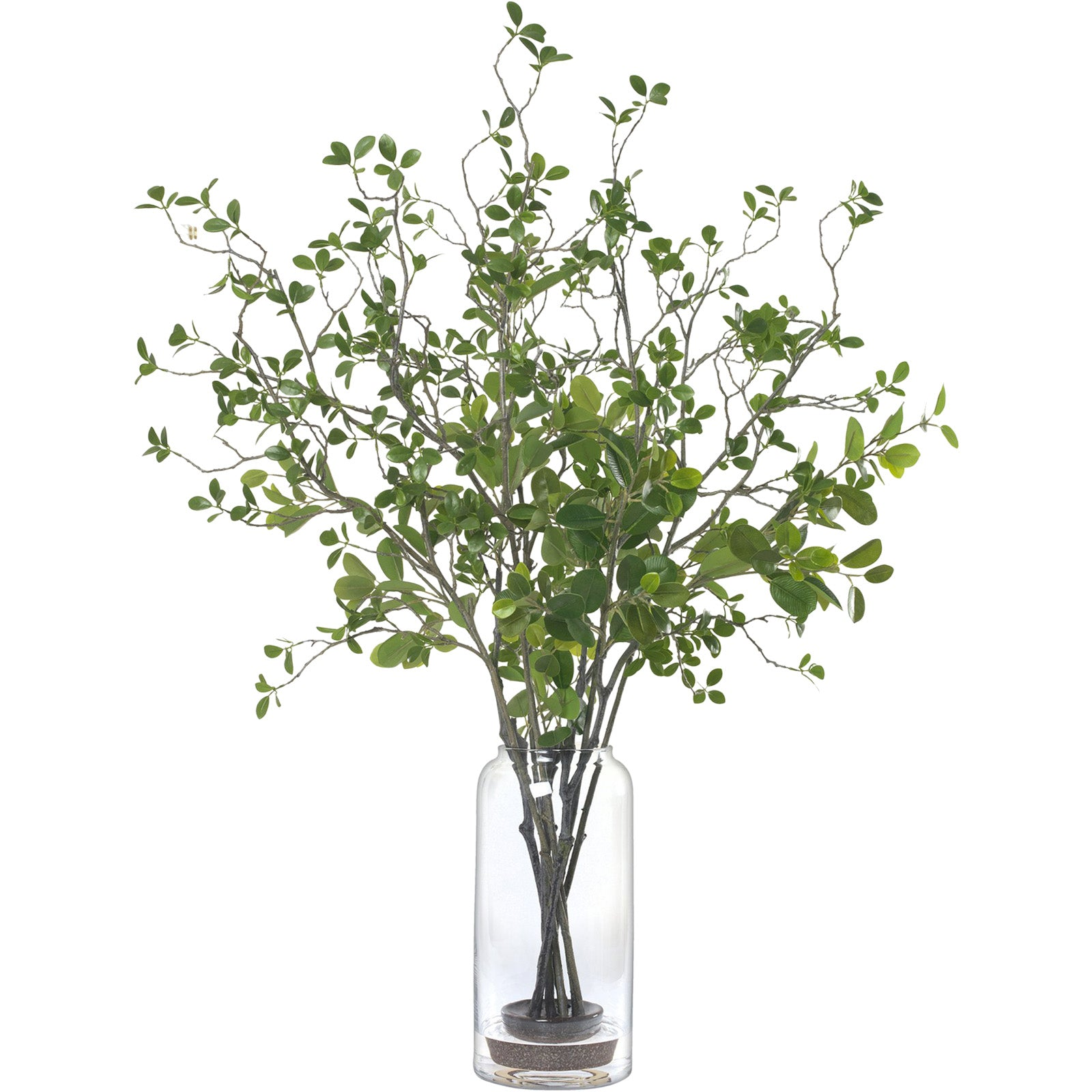 Tall Ficus Branche Arrangement