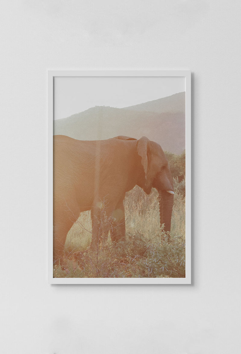 image of photo of side view of elephant with mountains in the background standing in grass in white frame on white wall.
