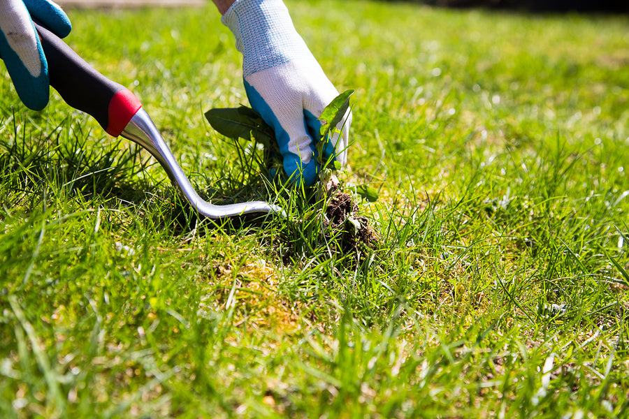 Organic Lawn Care: Tips for a Healthy Yard