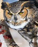Great Horned Owl with Reaching Claw