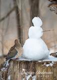 Mourning Dove with Snowman Friend