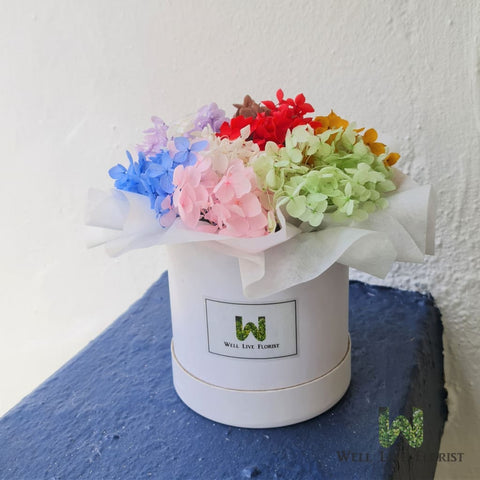 Preserved multi-color hydrangea with round shape flower box
