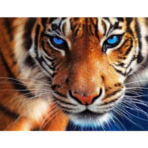 Blue Eye Tiger