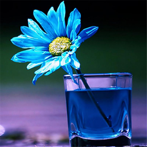 How to Make a Daisy Blue
