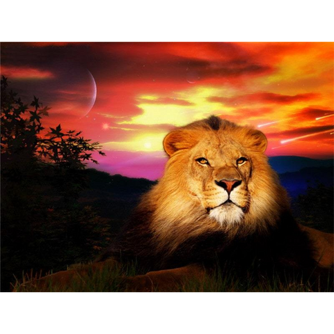 Image of Lion at Dawn