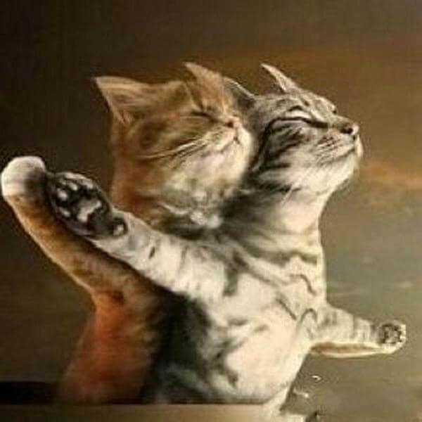 The Cats of Titanic