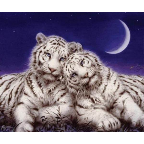 Image of Tigers Cuddling