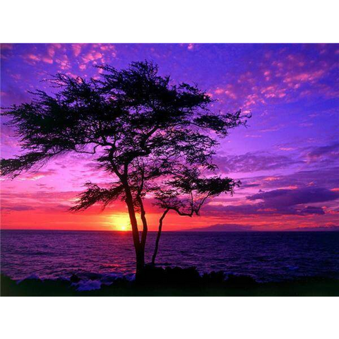 Image of Tree Sunset