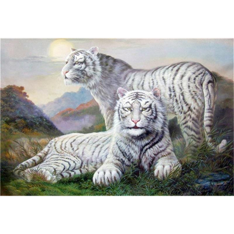 Image of White Tigers