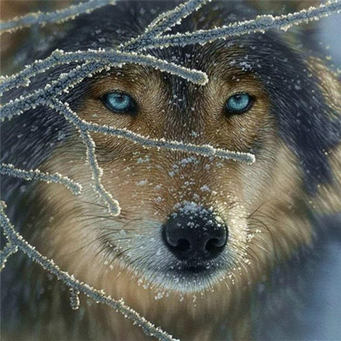 Image of Wolf Between Frozen Branches