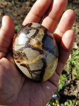 Large Septarian Palm Stone