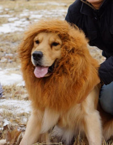 Large Dog Lion Wigs For Golden Retriver