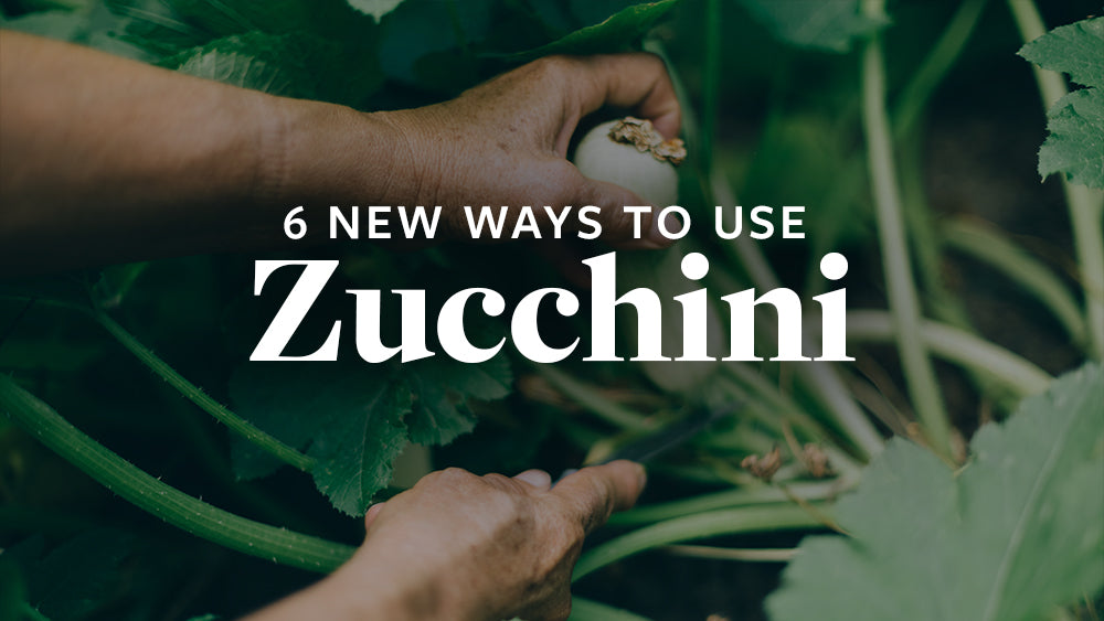 Top 6 Things to Make with Zucchini