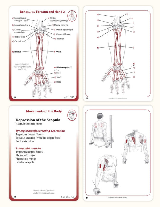 Trail Guide to the Body Flashcards Volume 2 - 5th Edition - Spa & Bodywork Market