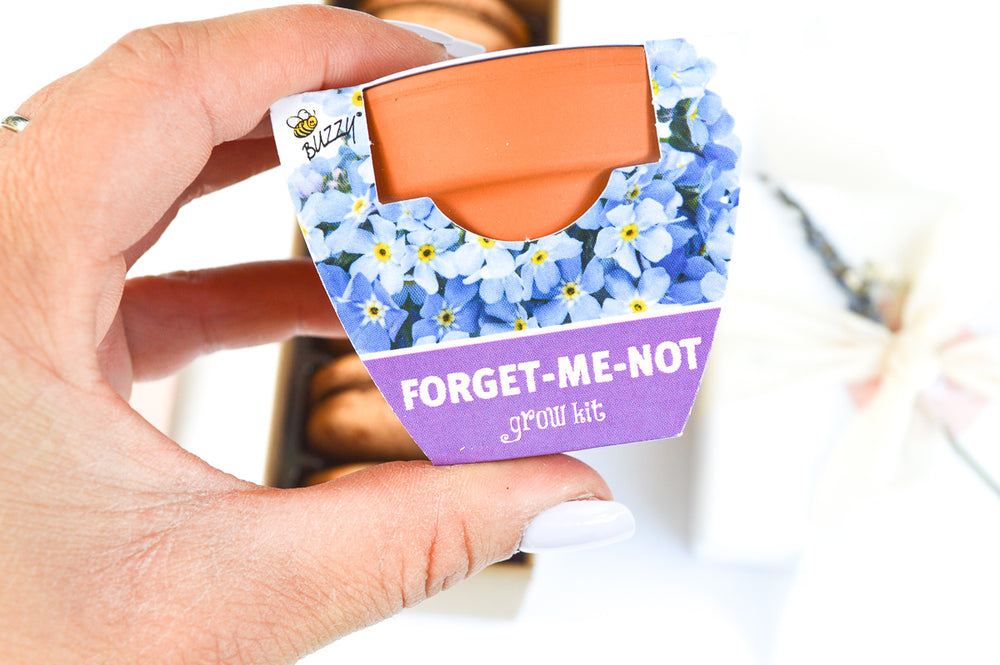 The Forget Me Not Box
