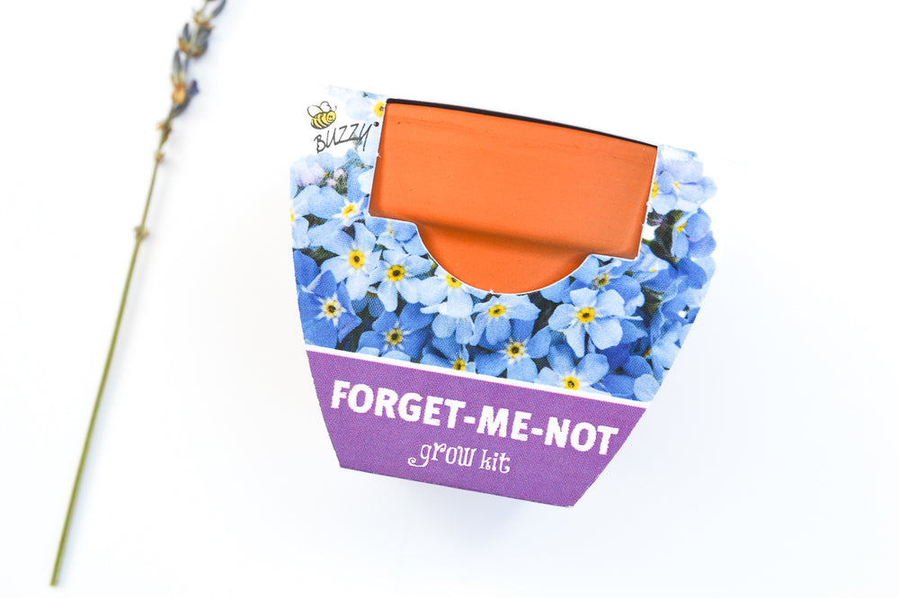 Mini Grow Pot - Forget Me Not Flowers