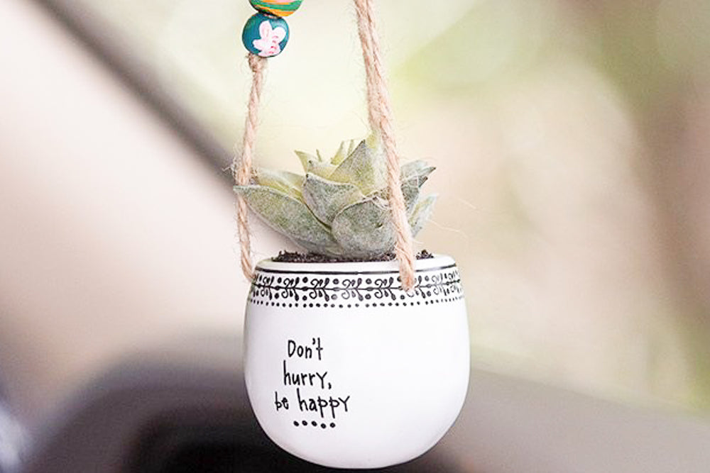 Dont Hurry be Happy Hanging Succulent