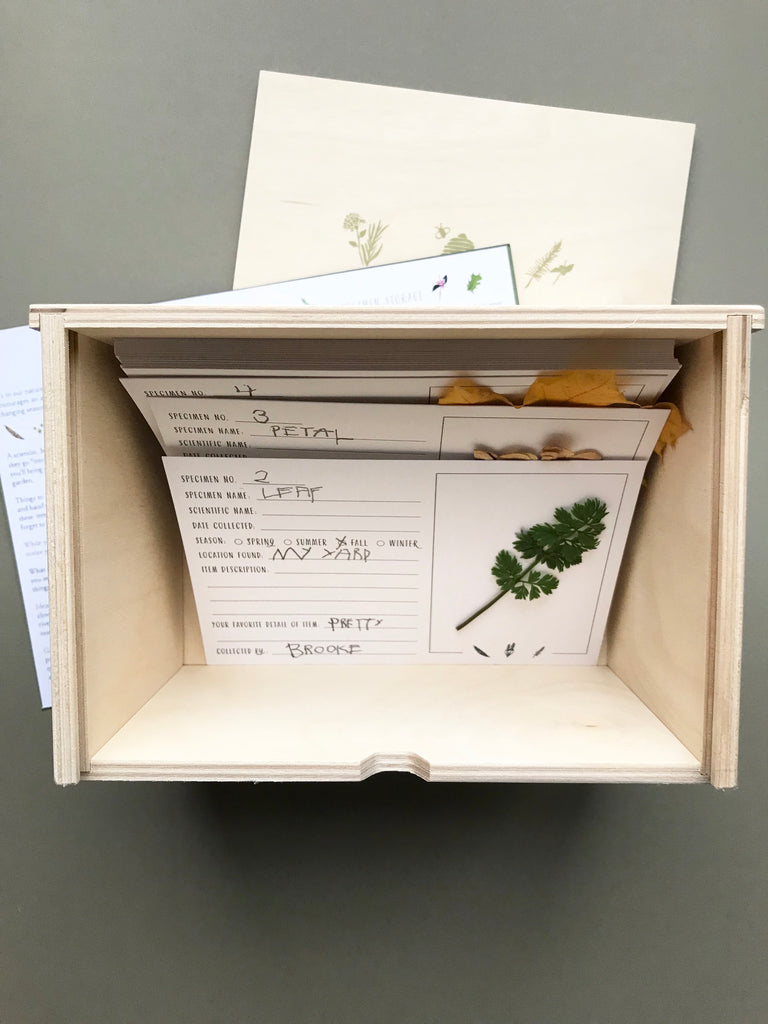 Wood specimen box & card set