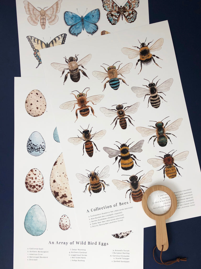 Illustrated Nature Charts