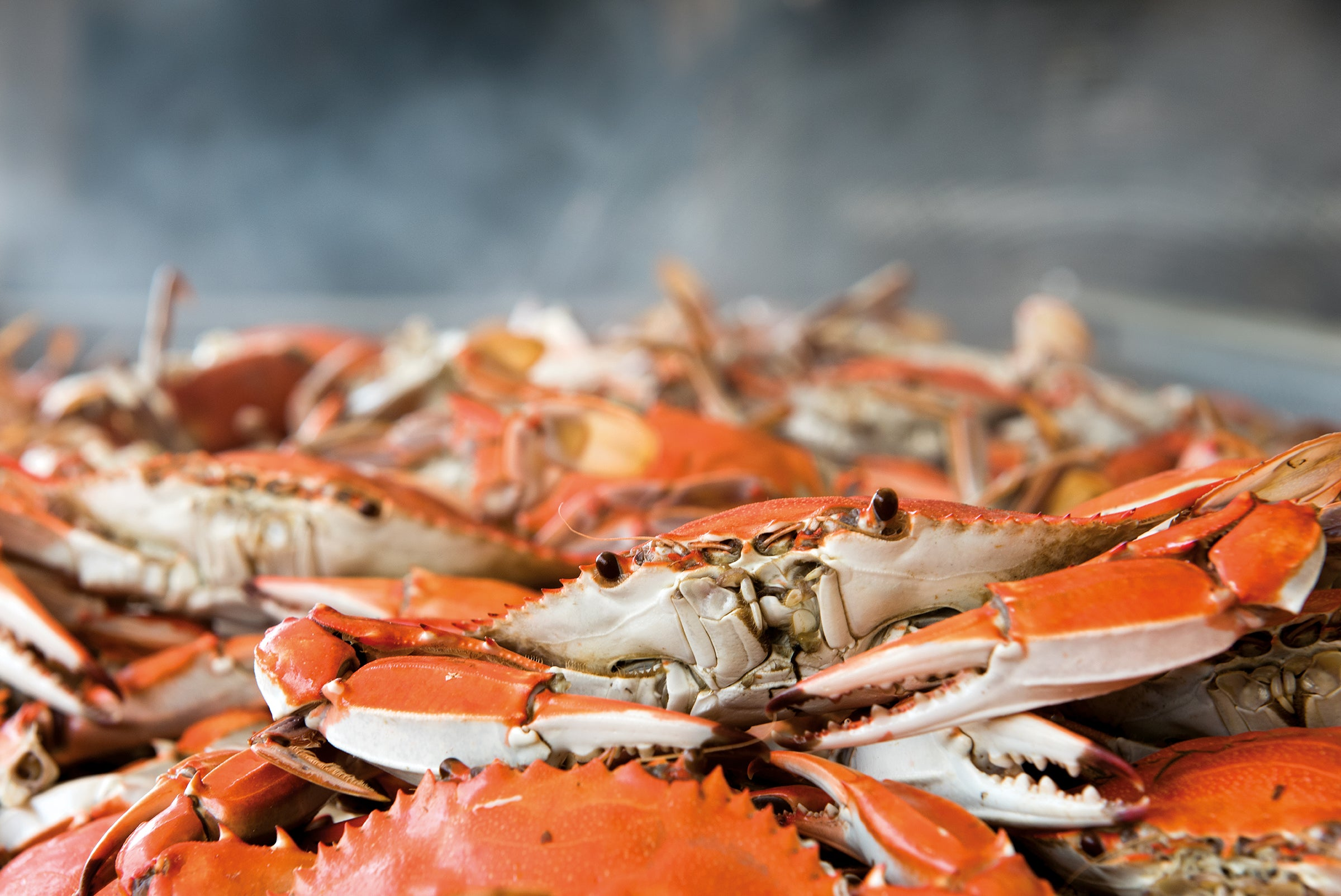 Steamed Crabs – Maryland Seafood Market