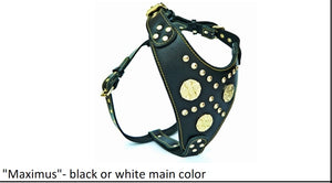 "Leather Harness - ""Maximus""- black or white main color"