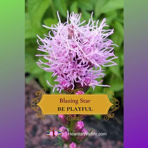 Blazing Star - Native pollinator garden