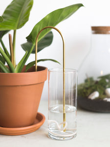 Plant watering straw