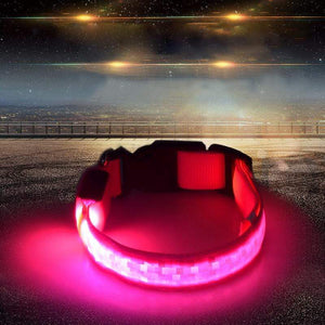 LED Dog Safety Collar Pink / 2.5 x 45-52cm LED Dog Safety Collar