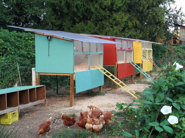 Colour chicken coop on the farm