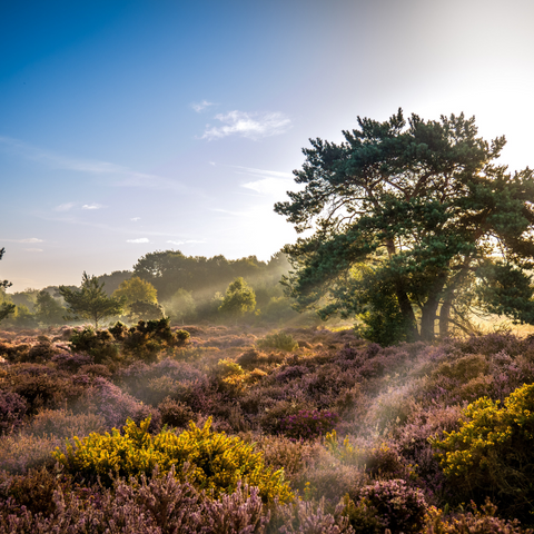 UK forest heathland