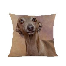 3 SIZES - Greyhound Throw Pillow Design 5