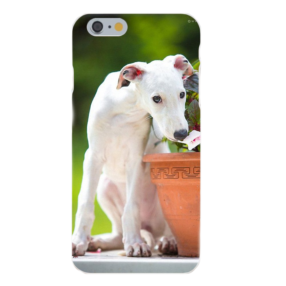 White Greyhound Silicone iPhone Cover