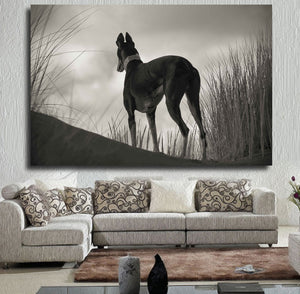 Soulful Eyes in Thought Greyhound Print