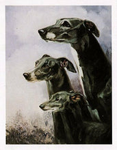 New Greyhound Trio Note Card Set 6 Notecards & Envelopes