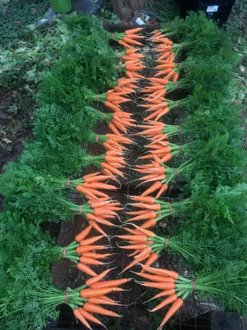 Carrot, Bunch