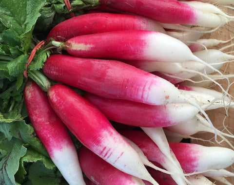 Radish, French Breakfast