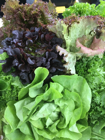 Head Lettuce, Farmers Choice