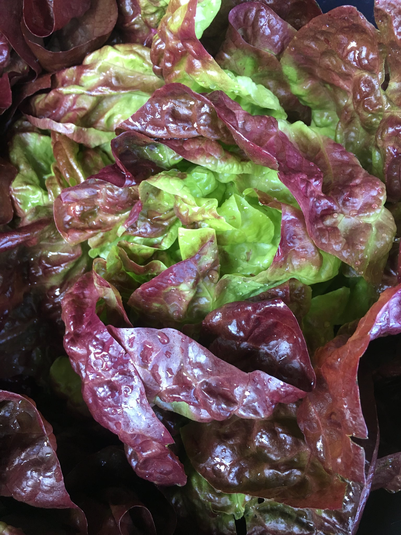 Head Lettuce, Red Butter