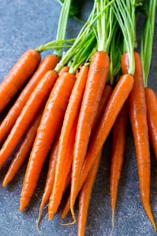 Topped Carrots, 1 lb. Bag--Sassafras Creek Farm