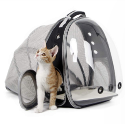 Cat Transparent Bag
