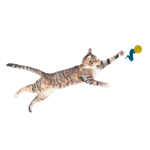 Dezi & Roo Wiggly Ping - Set of 2