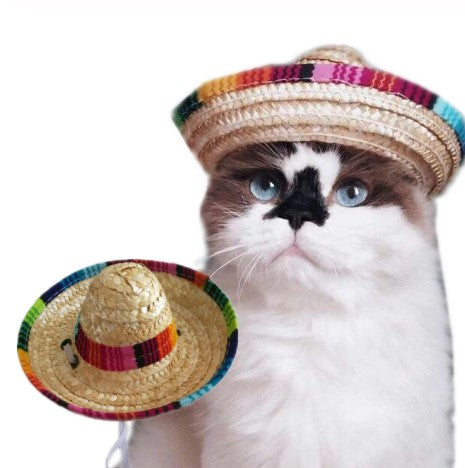 Cat Mexican Hat