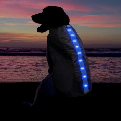 Cloth Dog LED Vest - Blue