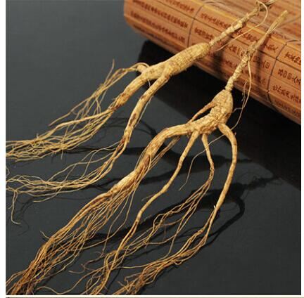 28 years old wild ginseng