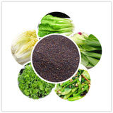 high nutrition vegetable seeds organic green food