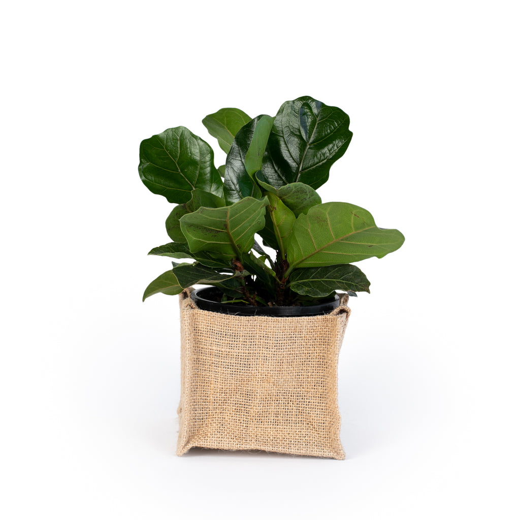 Indoor/House Plants