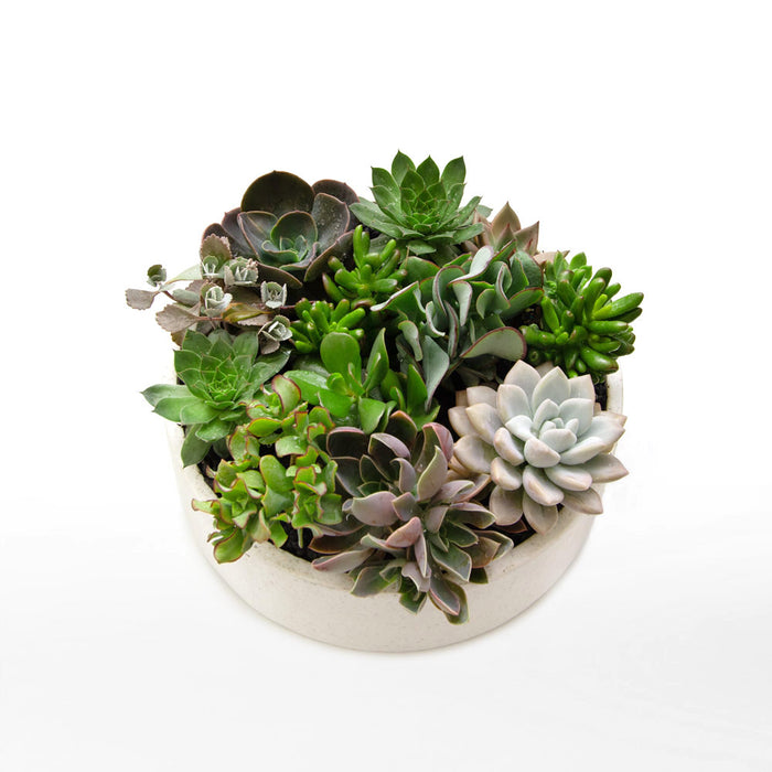 Potted Succulent Bowls